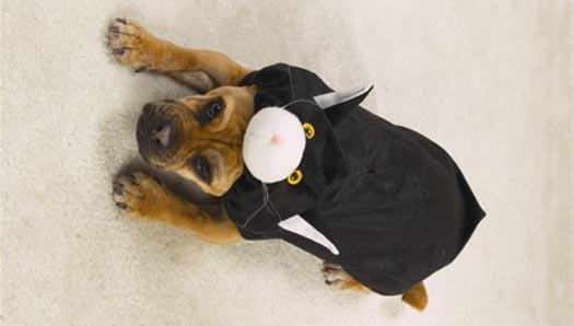 dogdressedascat